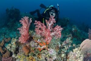 Bawah laut Pemuteran - Buleleng
